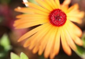 JaneshVaidya_flower_yellow